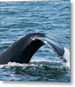 Humpback Whale Of A Tail Metal Print