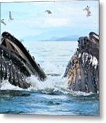Humpback Whales In Juneau, Alaska Metal Print
