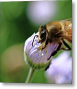 Hungry Bee Metal Print