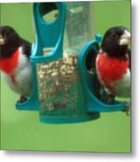 Hungry Birds Metal Print