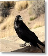 Hungry Crow Metal Print