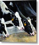 Hungry Holsteins Metal Print