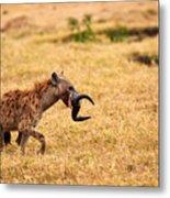 Hungry Hyena Metal Print