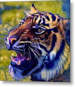 Portrait Of A  Tiger Metal Print