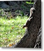 Hunting Acorns Metal Print