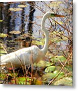Hunting For Food Metal Print