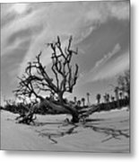 Hunting Island Beach And Driftwood Black And White Metal Print