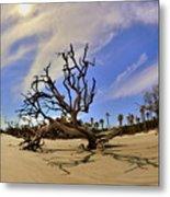 Hunting Island Beach And Driftwood Metal Print