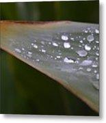 Hurricane Raindrops Metal Print