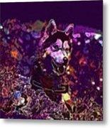 Husky Dog Pet Canine Purebred  Metal Print