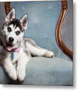 Husky Puppy II Metal Print