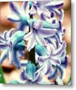 Hyacinth Photo Manipulation  Metal Print