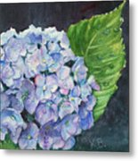 Hydrangea And Water Droplet Metal Print