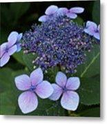 Hydrangea Blue Xi Metal Print