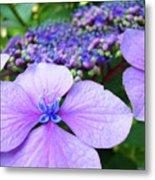 Hydrangea Flowers Art Prints Hydrangea Garden Giclee Art Prints Baslee Troutman Metal Print