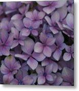 Hydrangea In Lavender 1 Metal Print