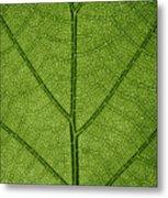 Hydrangea Leaf Metal Print