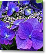 Hydrangea Plant Metal Print