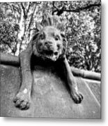 Hyena On The Wall Metal Print