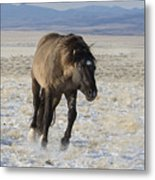 I Am Going After Her Metal Print by Nicole Markmann Nelson