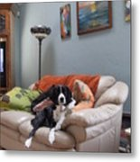 I Am Not A Couch Potato. I Am A Couch Dog Metal Print