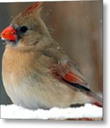 I Just Can't Resist The Beauty Of A Cardinal In The Snow Metal Print