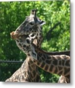 I Just Love Tall Spotted And Handsome Metal Print