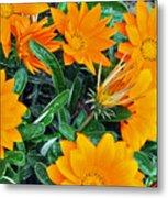 I Love Orange Flowers Metal Print