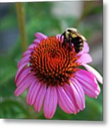 I Love Pollen And Pollen Loves Me Metal Print