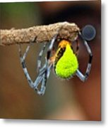 I See You Spider Metal Print