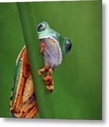 I See You - Tiger Leg Monkey Frog Metal Print