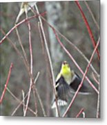I See You Two Birds In Flight Metal Print