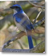 I Think I Found The Blue Bird Of Happiness Metal Print