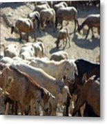 I Think We May Be Goats Metal Print