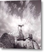 Ibex -the Wild Mountain Goats In The El Torcal Mountains Spain Metal Print