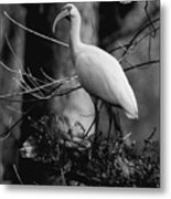 Ibis In Black And White  Metal Print