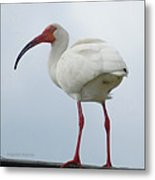 Ibis In The Morning Metal Print
