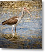 Ibis In The Rough Metal Print
