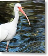 Ibis In The Swamp Metal Print