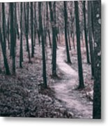 Ice Age Trail Near Lapham Peak Metal Print