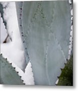 Ice Blue Agave Metal Print