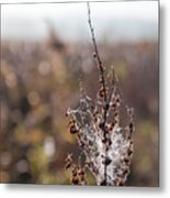 Ice Crystals On Dried Wild Flower Metal Print