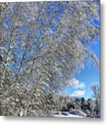 Ice Laden Birches Metal Print