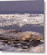 Ice On Lake Huron Metal Print