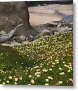Ice Plants On Moss Beach Metal Print