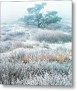 Ice Tree Shenandoah National Park Metal Print by Thomas R Fletcher
