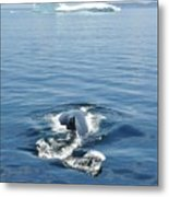 Iceberg And Humpback Metal Print