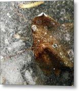 Iced Leaf Metal Print