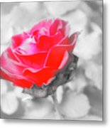 Iced Rose Metal Print