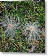 Icelandic Flora Metal Print